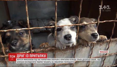 Жителі Миколаєва за три тижні розібрали по домівках понад 30 собак з притулку