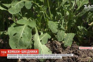 Шкідники знищують сади та городи українців: чому їх так багато цього сезону та чи є від них порятунок