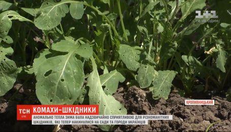 Вредители уничтожают сады и огороды украинцев: почему их так много в этом сезоне и есть ли от них спасение