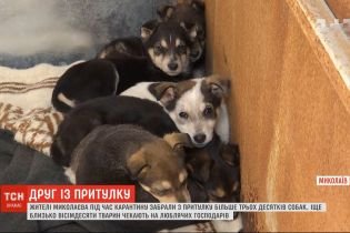 Жителі Миколаєва під час карантину забрали з притулку понад три десятки собак