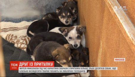Жители Николаева во время карантина забрали из приюта более трех десятков собак