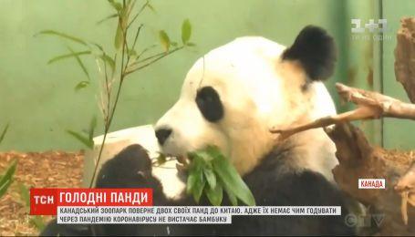 Канадский зоопарк вернет своих панд в Китай