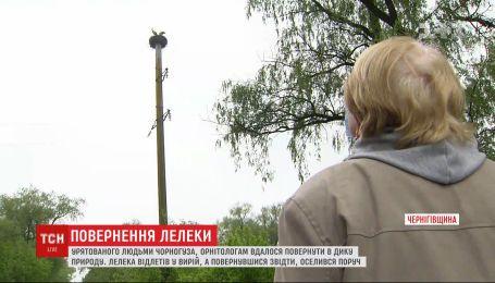 К селянке в Киевской области вернулся с юга аист, за которым она ухаживала почти год