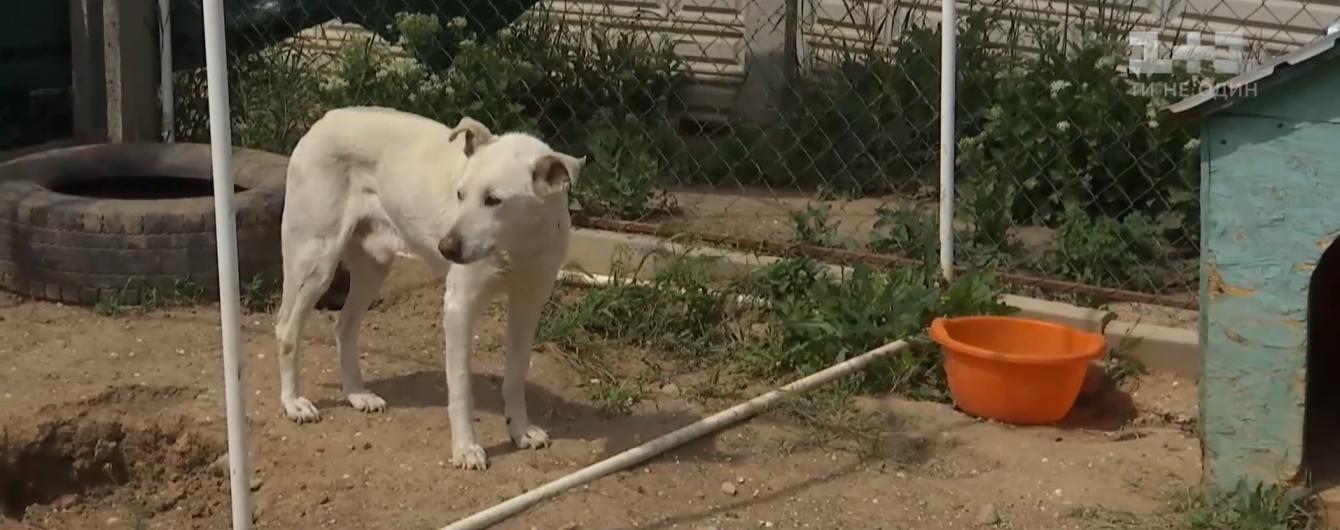У Миколаєві від тортур врятували пса Мартіна, якому тепер шукають нових господарів
