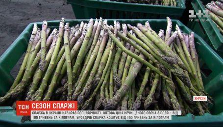 Спаржа набирает популярность в Украине: сколько стоит в разных регионах и как приготовить