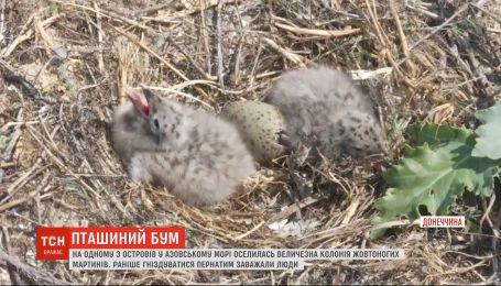 Колония чаек поселилась на птичьем острове в Донецкой области