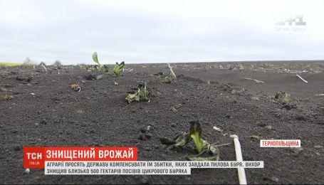 Аграрії просять державу компенсувати їм збитки, яких завдала пилова буря у Тернопільській області