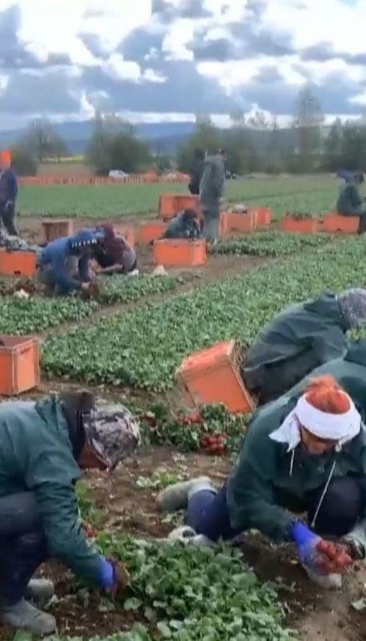 Возвращение к заработкам: как украинцы на карантине выезжают в Польшу