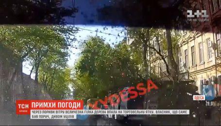 Из-за порывистого ветра в Одессе на овощную палатку упала ветка дерева