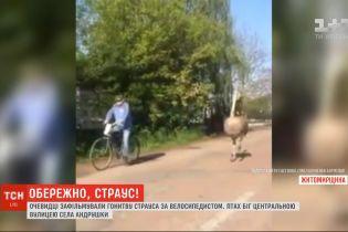 У Житомирській області очевидці зафільмували, як страус біг за велосипедистом