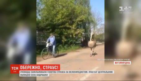 В Житомирской области очевидцы сняли, как страус бежал за велосипедистом