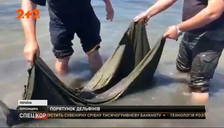 Двох дельфінів, які запливли у затоку і не могли вибратись у море, повернули в їхню стихію