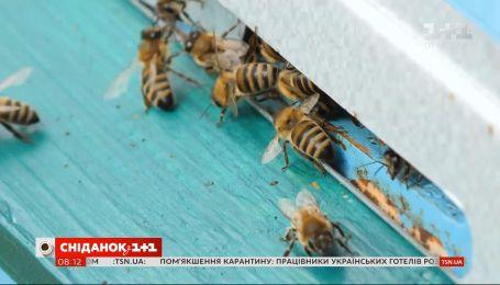 З якими проблемами стикаються українські бджолярі сьогодні — пряме включення