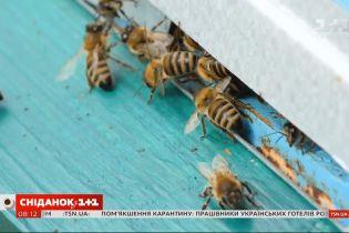 С какими проблемами сталкиваются украинские пчеловоды сегодня — прямое включение