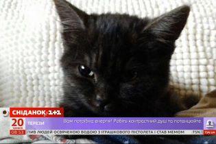Як кошеня з притулку перетворилося на справжню господиню дому — зворушлива історія Бетсі