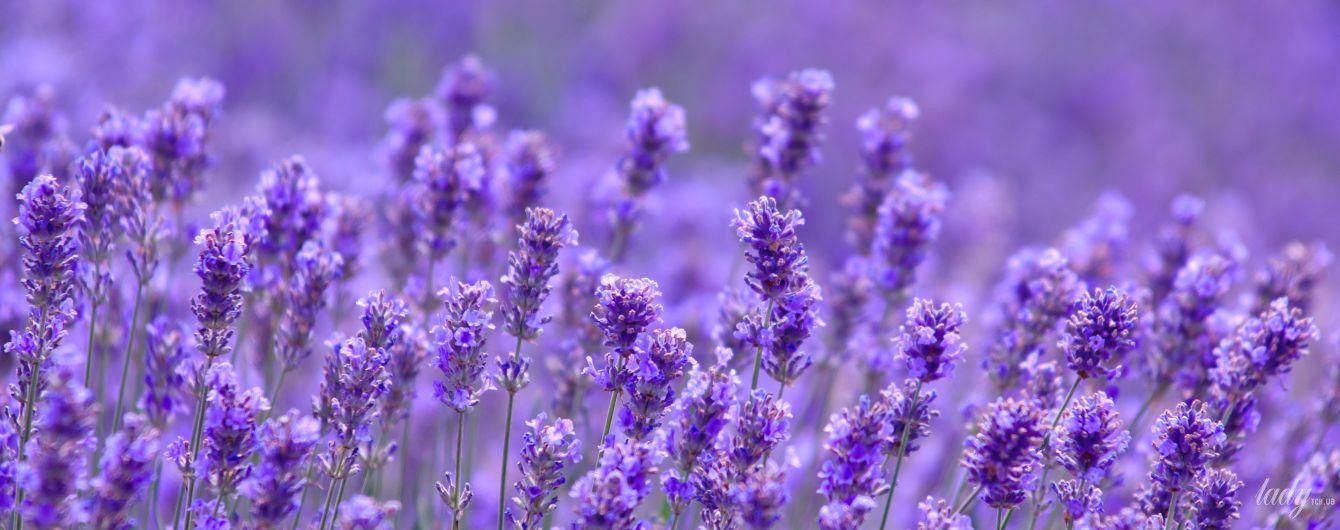 Як вирощувати квіти у затінку і на сонці