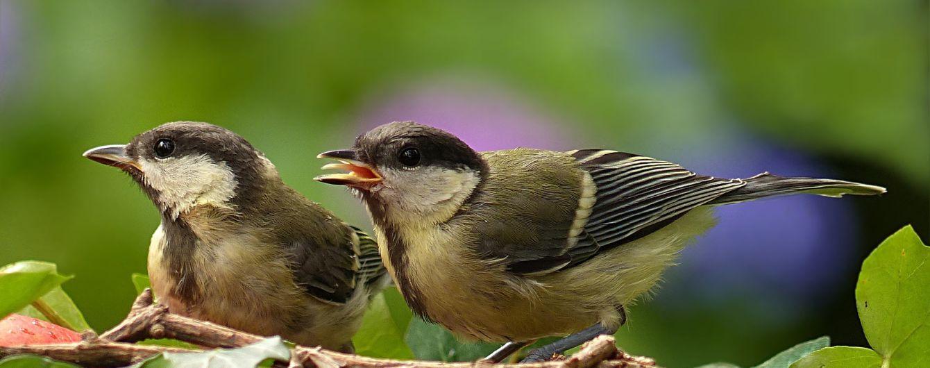 """Ученые обнаружили, что птицы разных видов могут понимать """"язык"""" друг друга"""