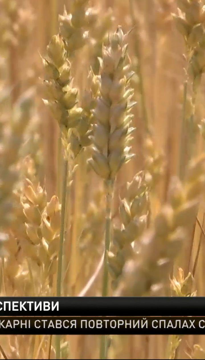 Украина побила рекорды экспорта зерновых