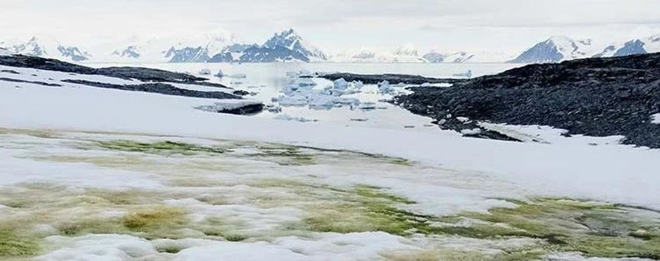 Антарктида зеленеет: на континенте возникает новая экосистема из-за глобального потепления