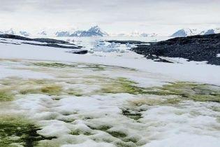Антарктида зеленіє: на континенті виникає нова екосистема через глобальне потепління