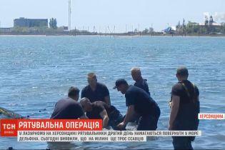 Рятувальна операція дельфіна у Лазурному отримала неочікуваний розвиток: ссавців стало більше