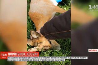 Работники благоустройства Гостомеля спасли раненую косулю