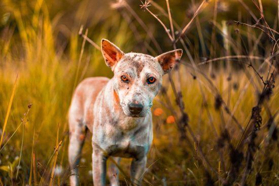Мін'юст продає собак за борги: тварин конфіскували у боржників