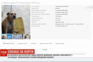 Собака – за борги: Мін'юст продає домашніх улюбленців на аукціонах