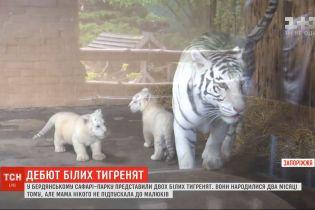 В бердянском Сафари-парке родились двое белых тигрят