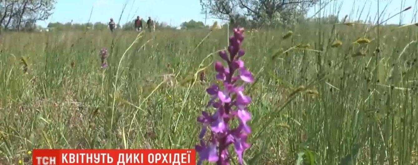 В Николаевской области зацвело самое большое в Европе поле диких орхидей