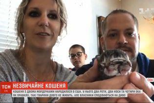 Кошеня з двома мордочками народилося у США