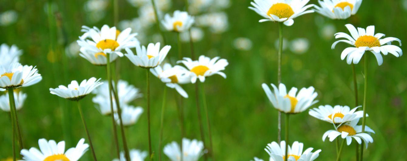 26 червня: цікаві факти, народні звичаї та прикмети