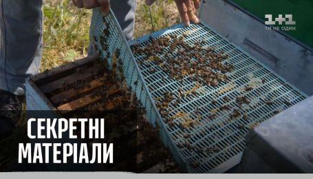 В Україні масово гинуть бджоли — Секретні матеріали