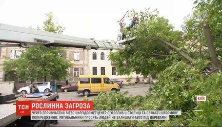 Штормове попередження у столиці: чому не варто залишати автомобілі під деревами