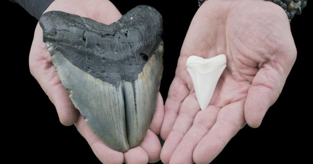 В США женщина во время прогулки с собакой нашла клык древнего подводного гиганта