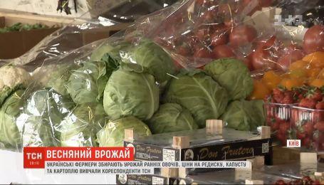 Урожай ранніх овочів: які ціни на городину та коли чекати здешевлення
