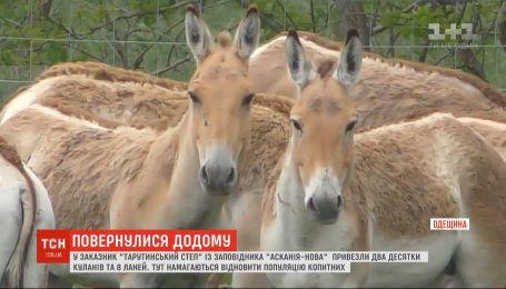 Как в Одесской области восстанавливают популяцию куланов и ланей