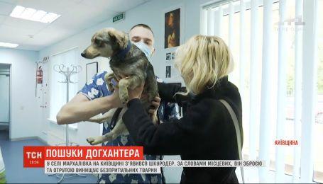 В Киевской области появился живодер, который оружием и ядом истребляет бездомных животных