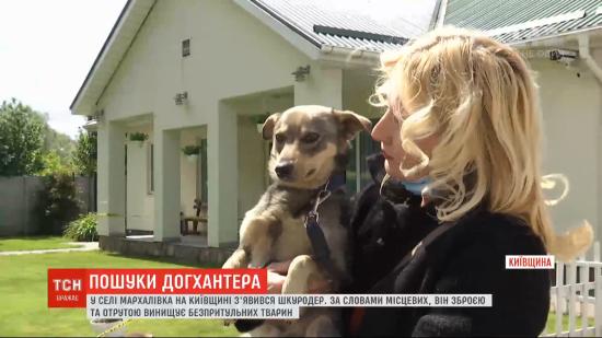 У селі в Київській області з'явився шкуродер, який труїть та відстрілює безпритульних тварин