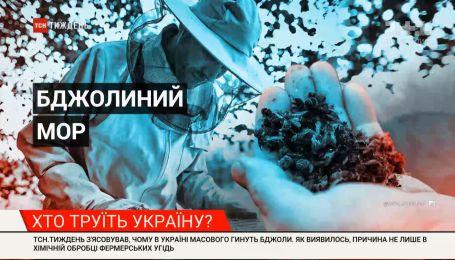 Не только химическая обработка: почему в Украине массово гибнут пчелы