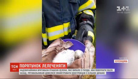 В Херсонской области чрезвычайники спасли птенца аиста, которое выпало из гнезда