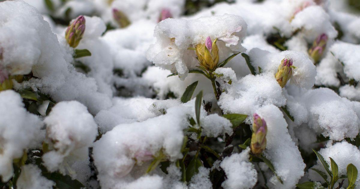 Синоптик дал прогноз погоды на зиму: когда ждать снег и заморозки