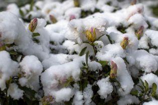 Весняні снігопади: як у травні раптово припорошило Європу і не тільки