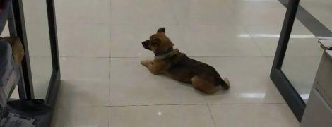 В Ухане верный пес три месяца не покидал больницу, где от коронавируса умер его хозяин