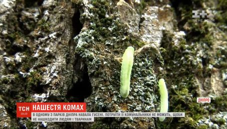 Нашестя комах: у Дніпрі зелена гусінь атакувала міські парки