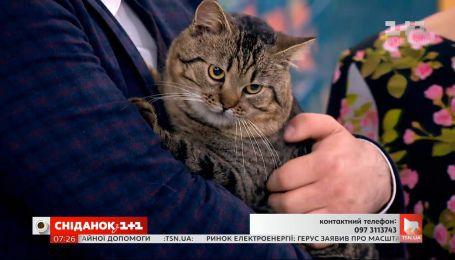 Котик Платон шукає турботливих господарів