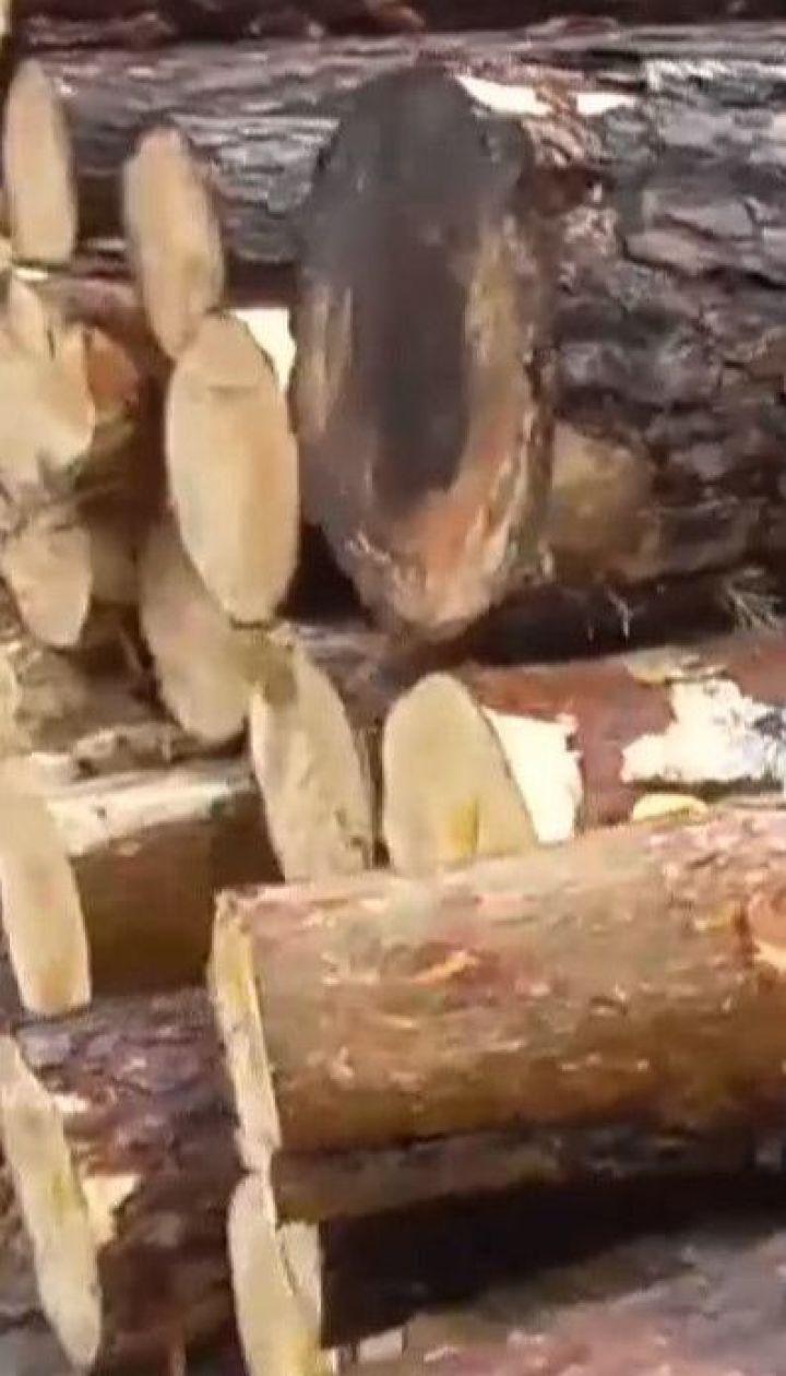 В Волынской области произошли массовые обыски у подозреваемых в краже леса