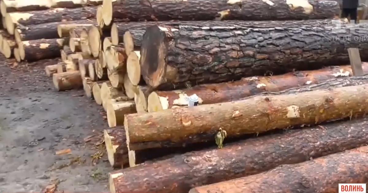 Масштабная спецоперация: на Волыни полицейские провели обыски у подозреваемых в хищении леса