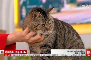 Чарівний котик Платон все ще шукає родину