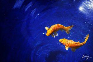 Что мы знаем о людях, родившихся под знаком Рыб